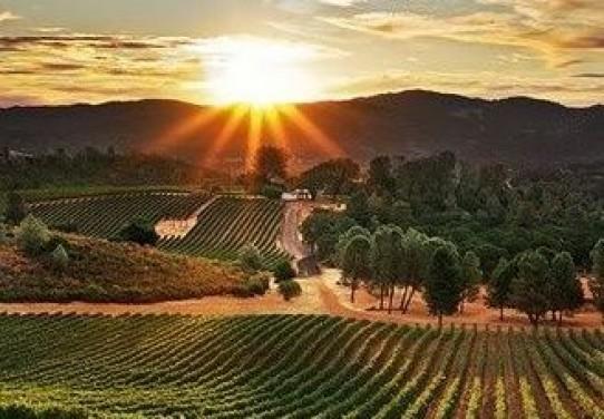 A bor szebb melódiát csal a fülekbe, a zene az ízeket fokozza